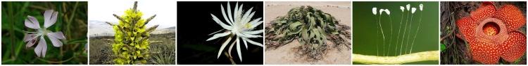 Der Blumensammler